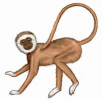 Monkey by asynjur