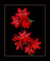 Crimson Flag by Althytrion