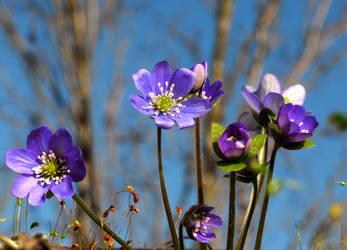 Finally Spring! by Althytrion