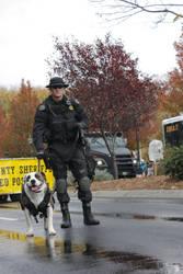 SWAT dog by Roitan