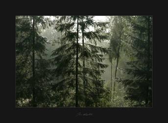 Dawn by Tigru