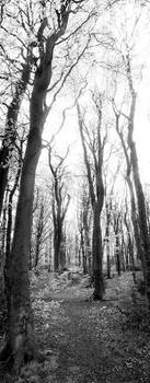 Tree pano by sclarke1986