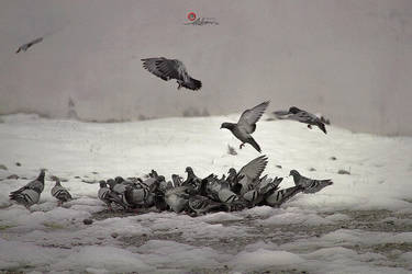 Fly and snow by pedrum