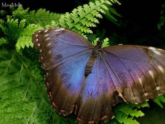 Butterfly. by MelissaBalkenohl