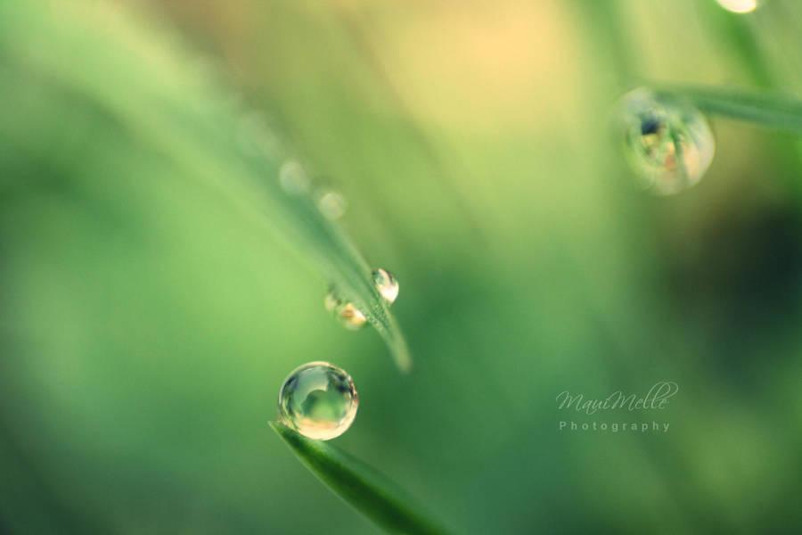Green emotions. by MelissaBalkenohl
