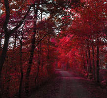 Red enchantment. by MelissaBalkenohl