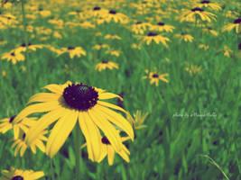 Summertime. by MelissaBalkenohl