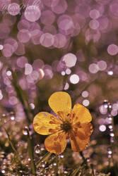 Yellow Innocence. by MelissaBalkenohl