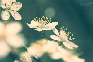 Blossom~ by MelissaBalkenohl