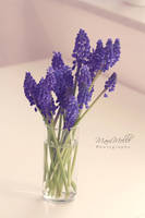 For you~ by MelissaBalkenohl