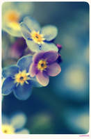 Forget me not - 4 by anjali