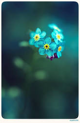 Forget me not - 8 by anjali
