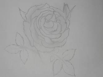 A Rose by BlackRose513