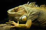 Lizard by KarlDawson