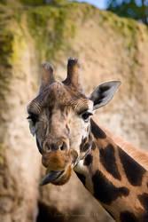 Rude Giraffe by KarlDawson