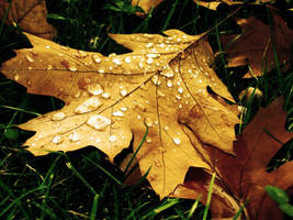 Golden Leaf... by Erylum