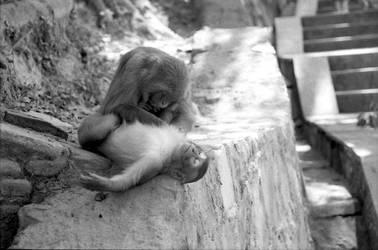 Monkey Business by emrerende