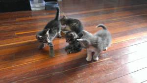 Kittens by LeeV101