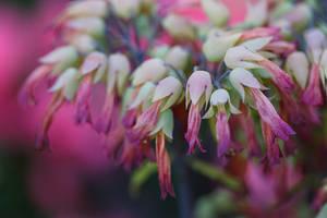 Cute Plant by BlackRoomPhoto