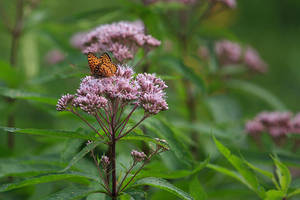 Butterfly by BlackRoomPhoto