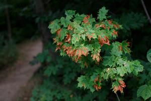 Edges of Autumn by BlackRoomPhoto