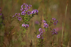 Wildflowers by BlackRoomPhoto