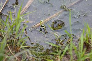 Sad Frog Vol. 2 by BlackRoomPhoto