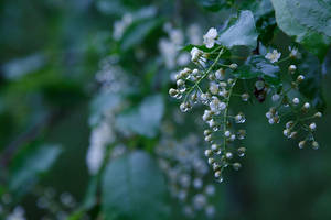 After the Rain by BlackRoomPhoto