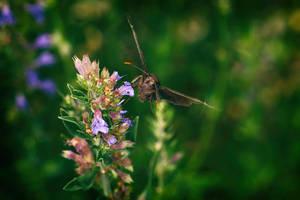 Moth by BlackRoomPhoto