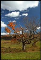 Vermont 4 by BlackRoomPhoto
