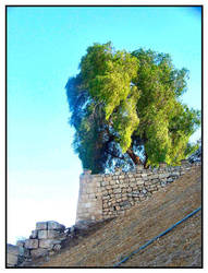 Downhill Tree. by keylesspiano