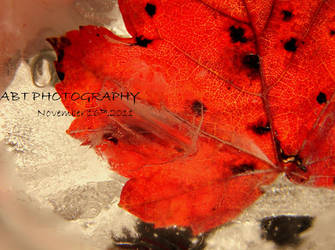 A Frosty Autumn by ABT-Photography