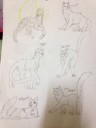 some of my characters of the warrior cats by Tamaelreyleonamino