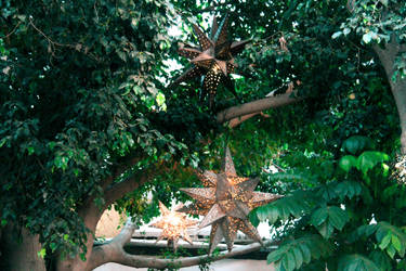 Tree stars by DragonsRforever