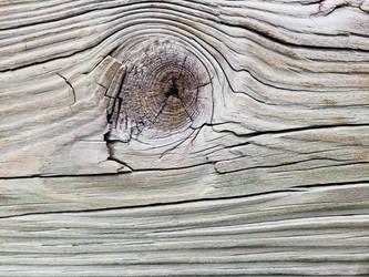 Weathered Wood #9 (Macro) by CooperationIsKey