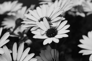 twin flowers by Anavis