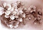 Cherry blossom by LiigaKlavina