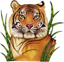 Tiger by SAU21866