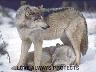 True Love by SxyFoxy