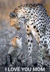 I love you, mom! by SxyFoxy