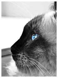 Blue-eyed Cat 05 by Zavorka