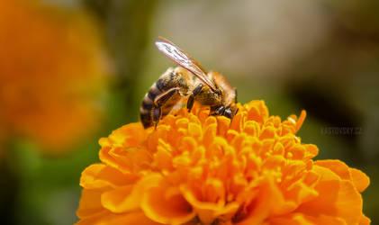 Bee by Zavorka