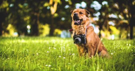 Jake, the Photographer by Zavorka