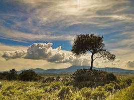 a stare at heaven by panos-gr