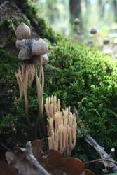Mushrooms by dgheban