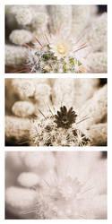Small cactus flower Vis UV IR comparison by DavidKennard