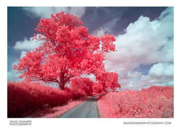 [EIR / Aerochrome] Tree, Hedges, Road, and Sky by DavidKennard