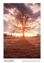 Winter tree false colour infrared by DavidKennard