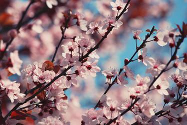 La Primavera Trompetera by PetitPhantomhive