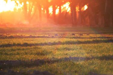 Golden Field by bluemix2